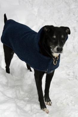 ivan snow dog a