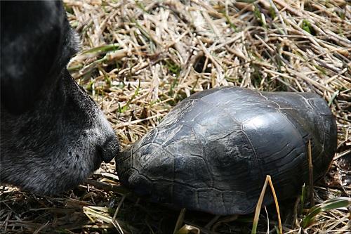 ivan & turtle