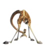 Melman-2-icon