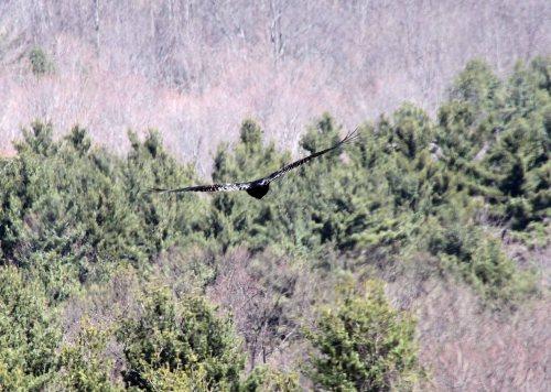 hawk fly sky 2