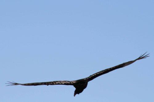 hawk fly sky 3