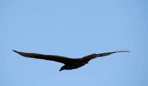 hawk fly sky 4
