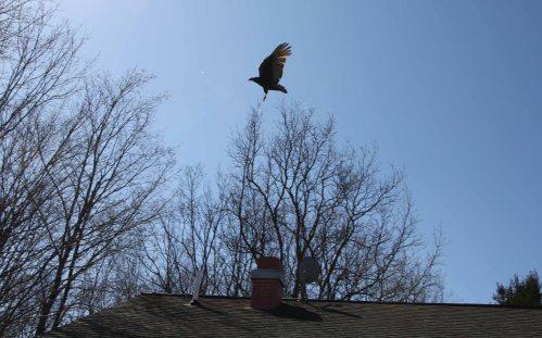 hawk fly sky 6