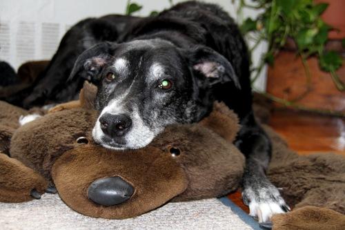 ivan cutest dog ever oct 2012 (9)