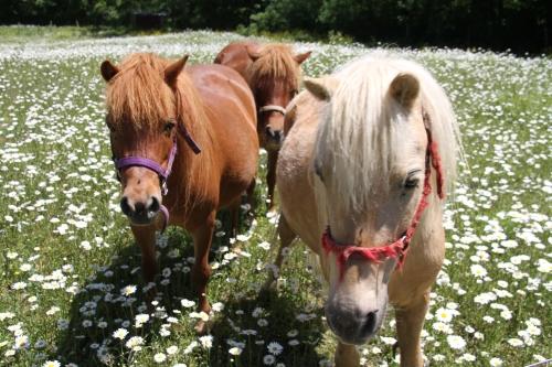 daisy flower horses (13)