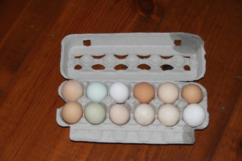 colored eggs farm fresh (4)