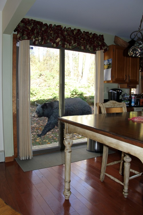 diane's house bear kitchen