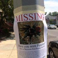 have you seen penelope?